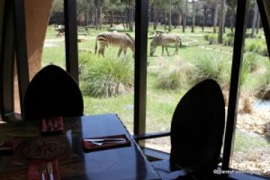 Sanaa Restaurant at the Animal Kingdom Lodge Resort